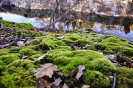 A ground's-eye view of a blanket of green moss strewn with brown leaves, with a view of Black Pond and the opposite bluff in the distance.