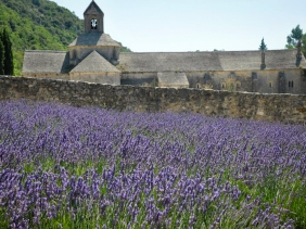 lavendar fields at the Sénanque Abbey in Provence, France