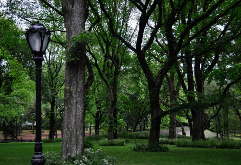 Still life in New York City's Central Park - trees and lamppost