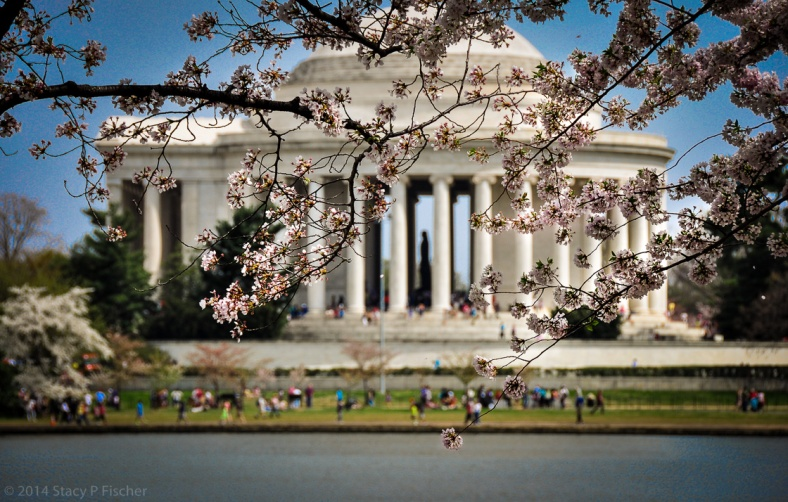 The statue of Thomas Jefferson in the distance is framed by branches of cherry blossoms and the pillars of the monument.