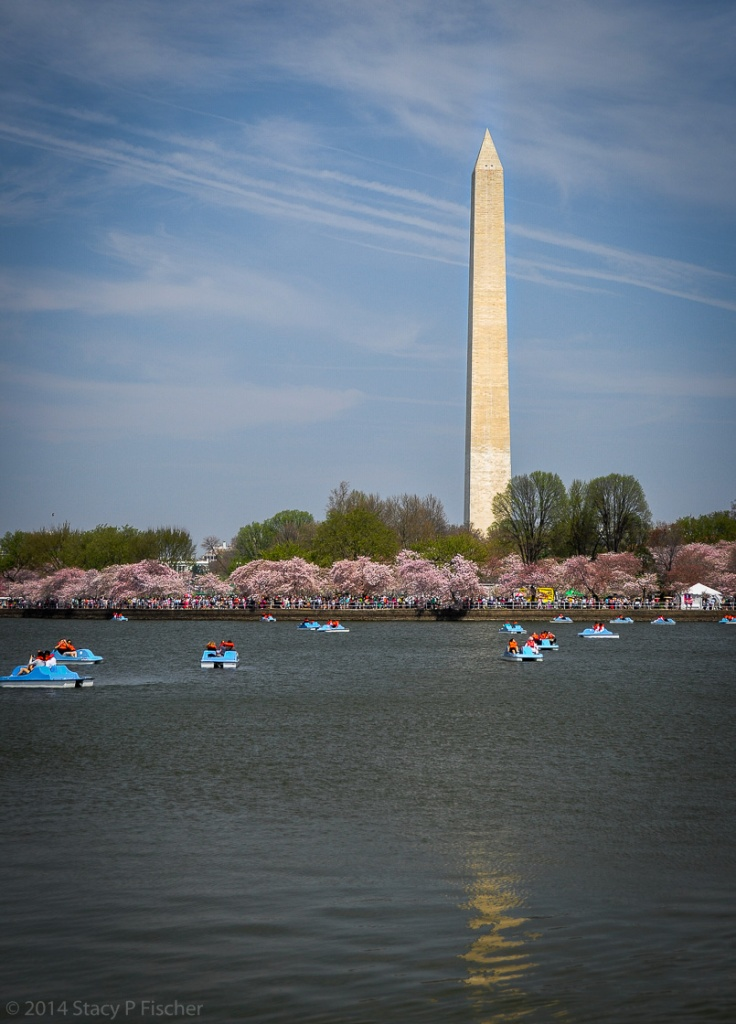 The Washington Monument provides a majestic background for cherry blossoms at their peak and paddleboaters on the Tidal Basin.