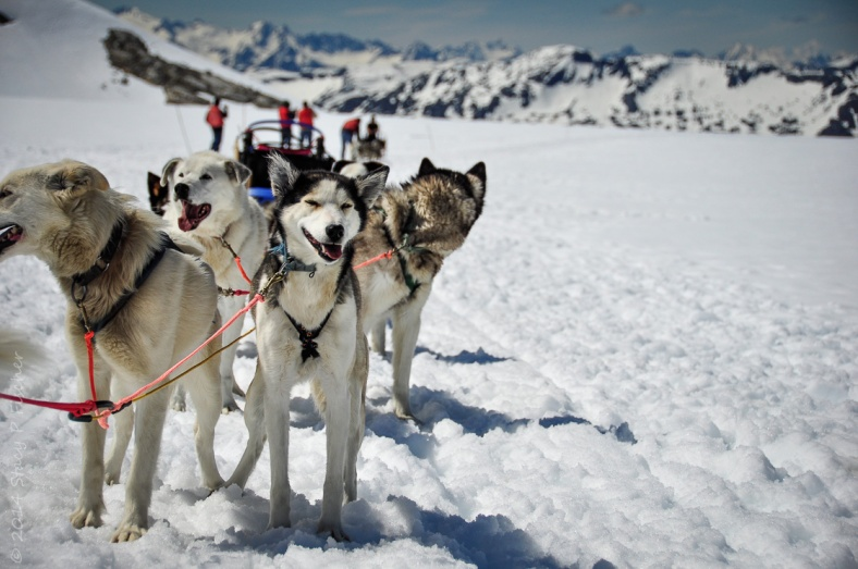 Ten huskies harnessed together against a backdrop of the vast Denver Glacier and distant snow-capped mountains.