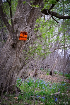 "Tree with a bright orange ""no trespassing"" sign stands in the middle of the woods surrounded by bluebells."