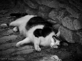 Black and white cat lying on a stone road in the shade against a stone wall.