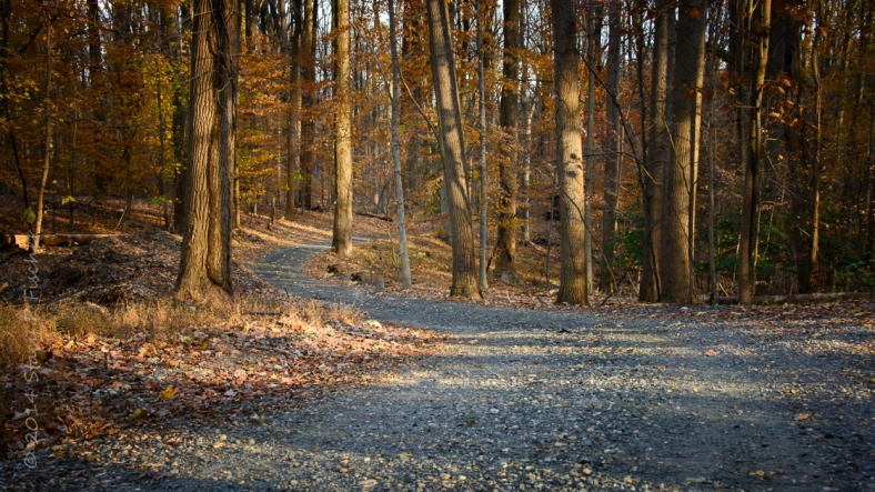 Path dappled in sunlight winding through autumn-colored woods until it disappears around the bend.