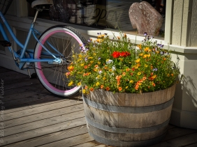 Whiskey Barrel filled with summer flowers