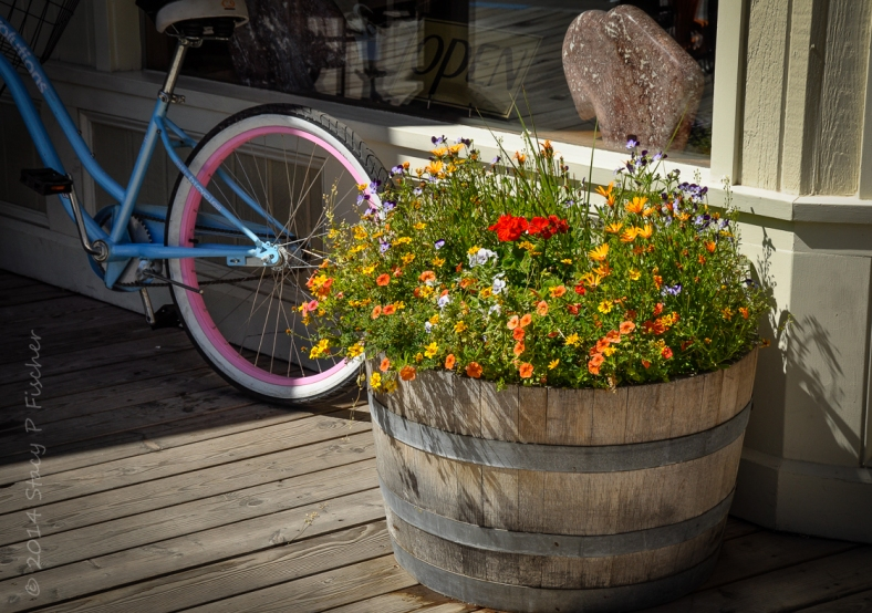 Yellow, orange, red, purple, and white flowers bloom in a whisky barrel planter, bathed by the sun.