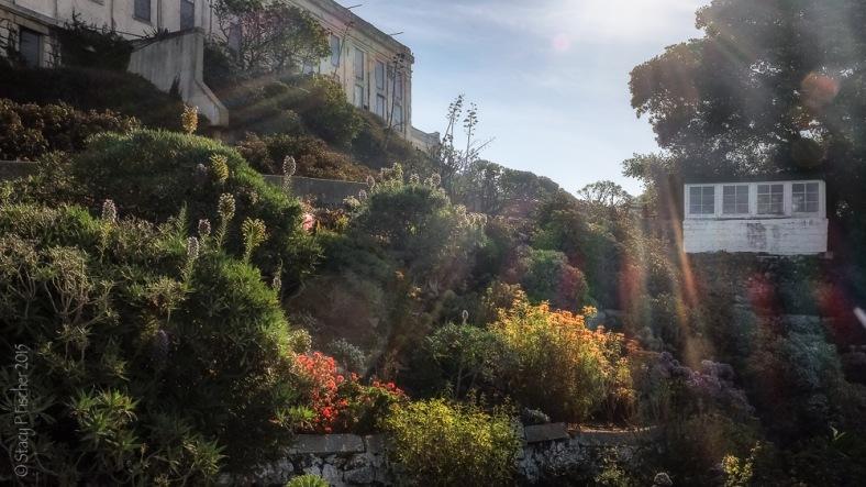 Alcatraz Island West Lawn gardens