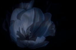 Bren Ryan, ryanphotography