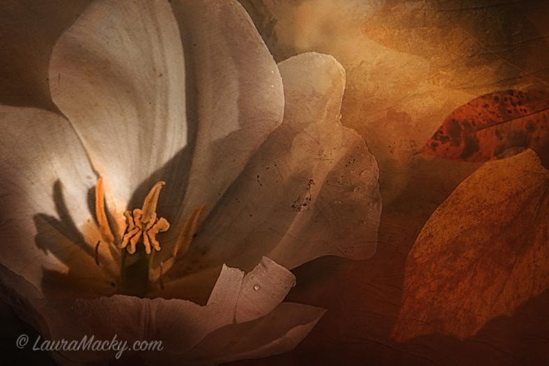 Laura Macky, Laura Macky Photography