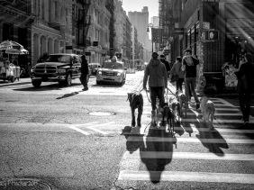 Dog walker in SoHo, New York City
